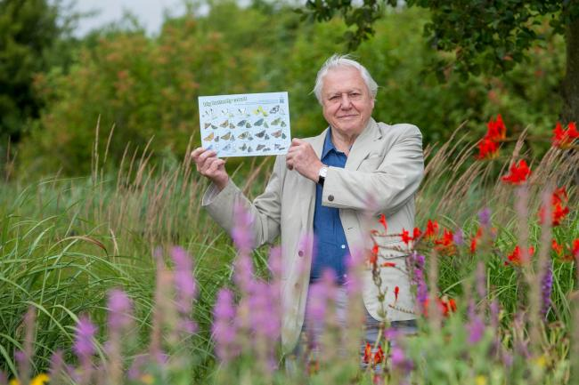 Butterfly Conservation President, Sir David Attenborough. Picture: Butterfly Conservation