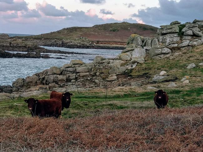 Life on a Scilly smallholding