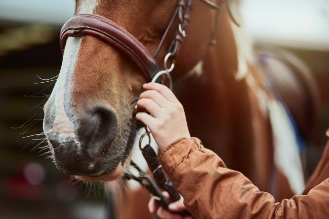 All equines attending this year's Royal Welsh Show must be properly vaccinated