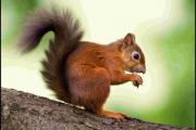 Bob the Squirrel has a huge following in his bid to fight for nature