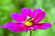 The CPA has welcomed the National Pollinator Strategy