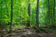 Ancient woods across the UK are under threat from development