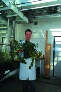 Dr Sharp with the tomato plants growing in the greenhouse at Lancaster University
