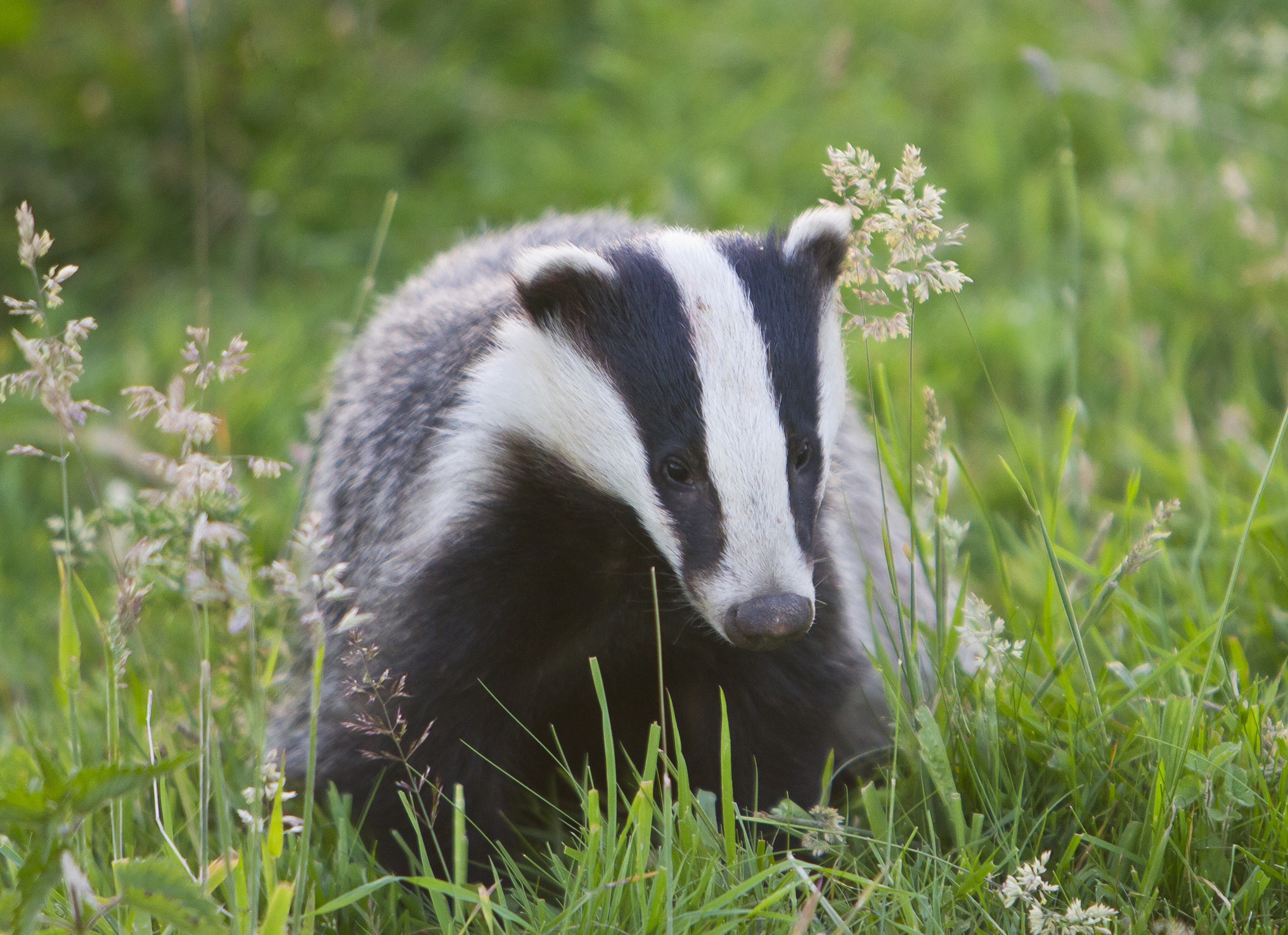 Number of new cases of bTB fall in  Gloucestershire and Somerset