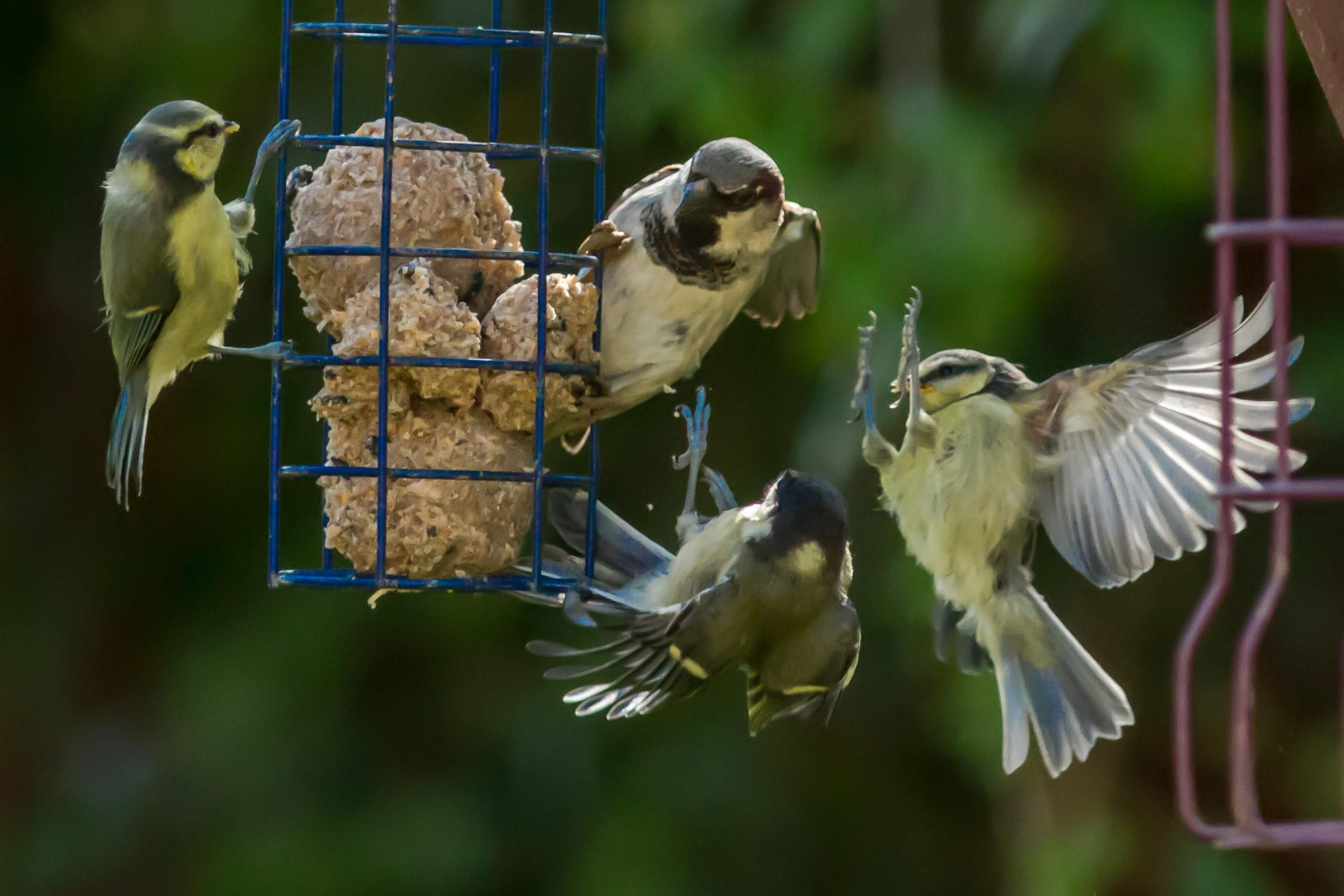 House sparrow was most recorded in Big Garden Birdwatch 2017