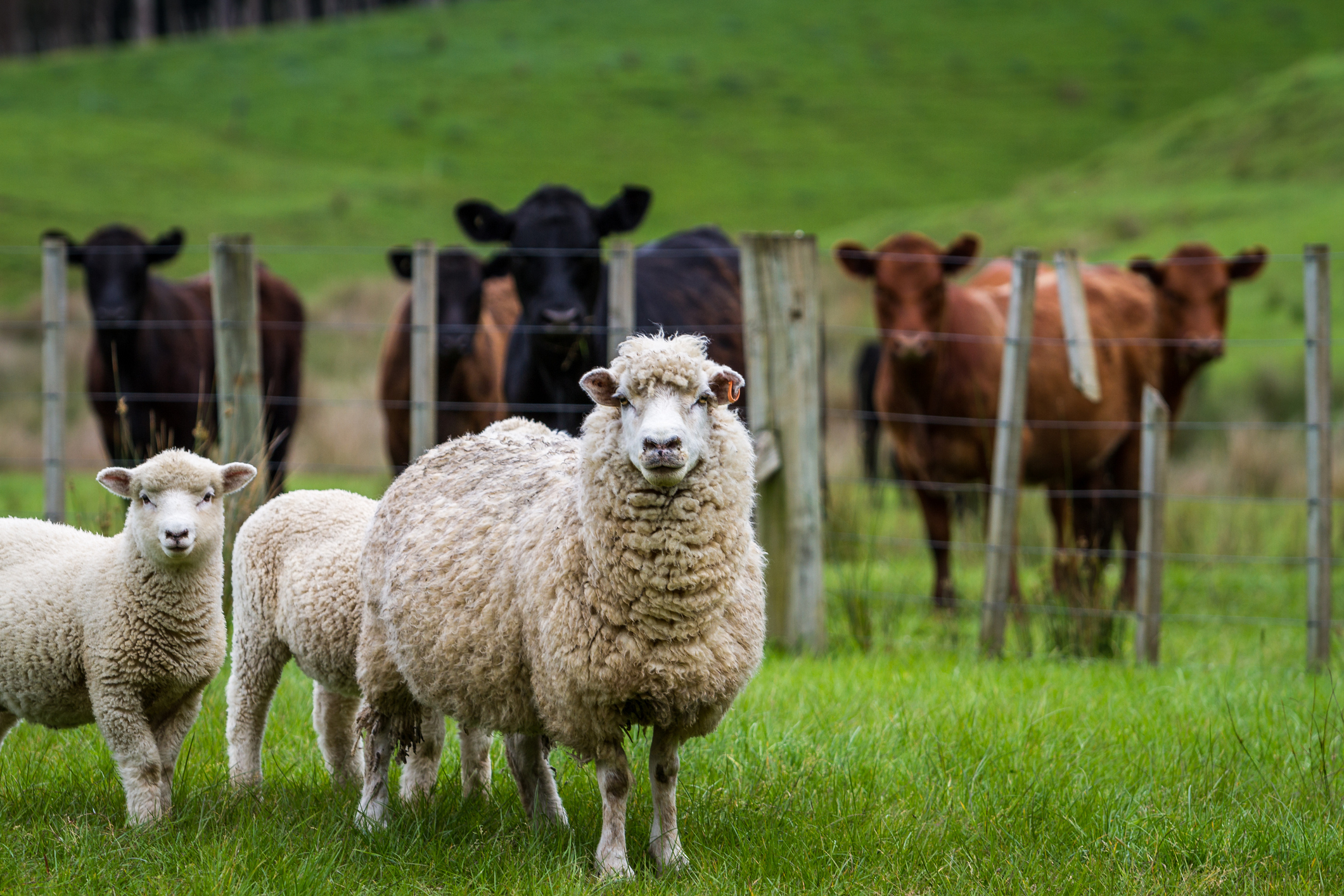Latest liver fluke warning urges livestock farmers to keep on guard