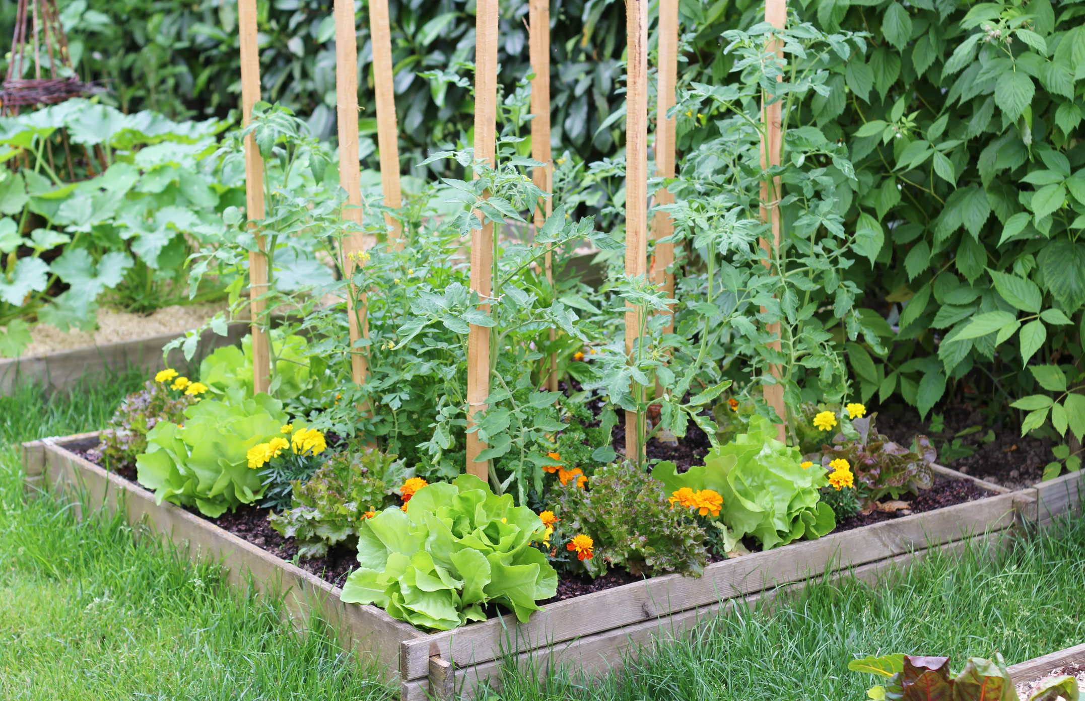 There are many benefits to companion planting