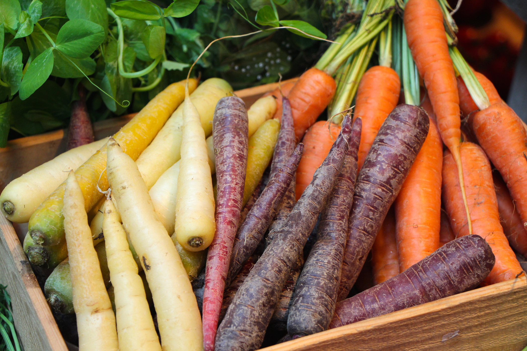 Getting to the root of it: how to grow carrots