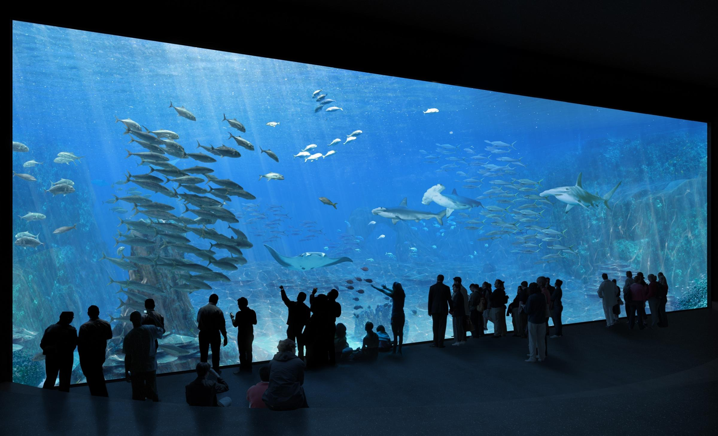 NAUSICAA, the French National Sea Centre, becomes one of world's largest aquariums