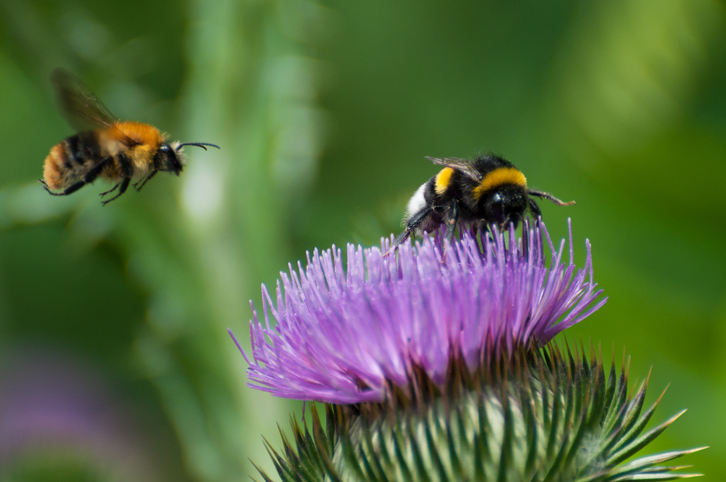Three top tips on how to help pollinators this winter