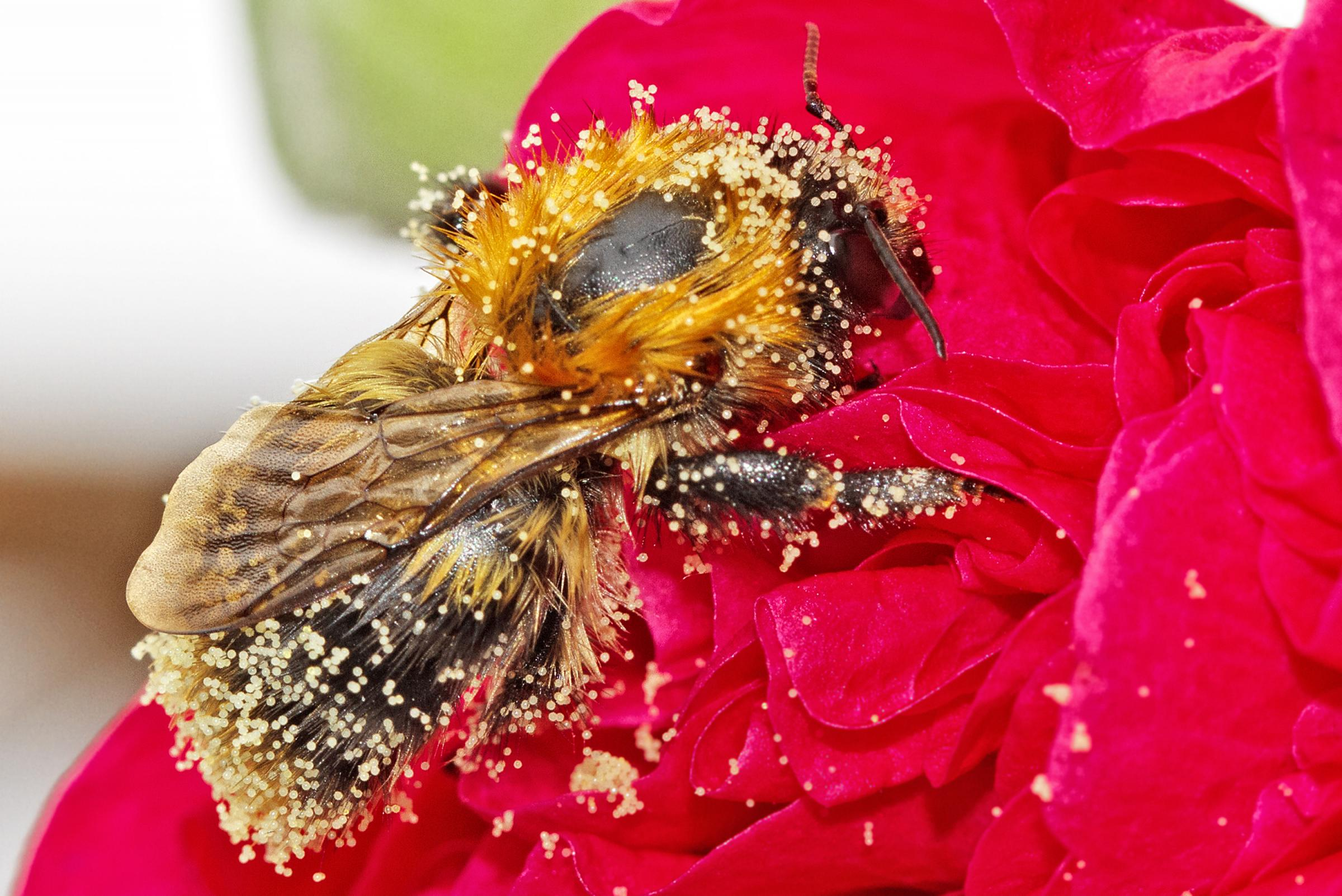 World Bee Day May 20 2018