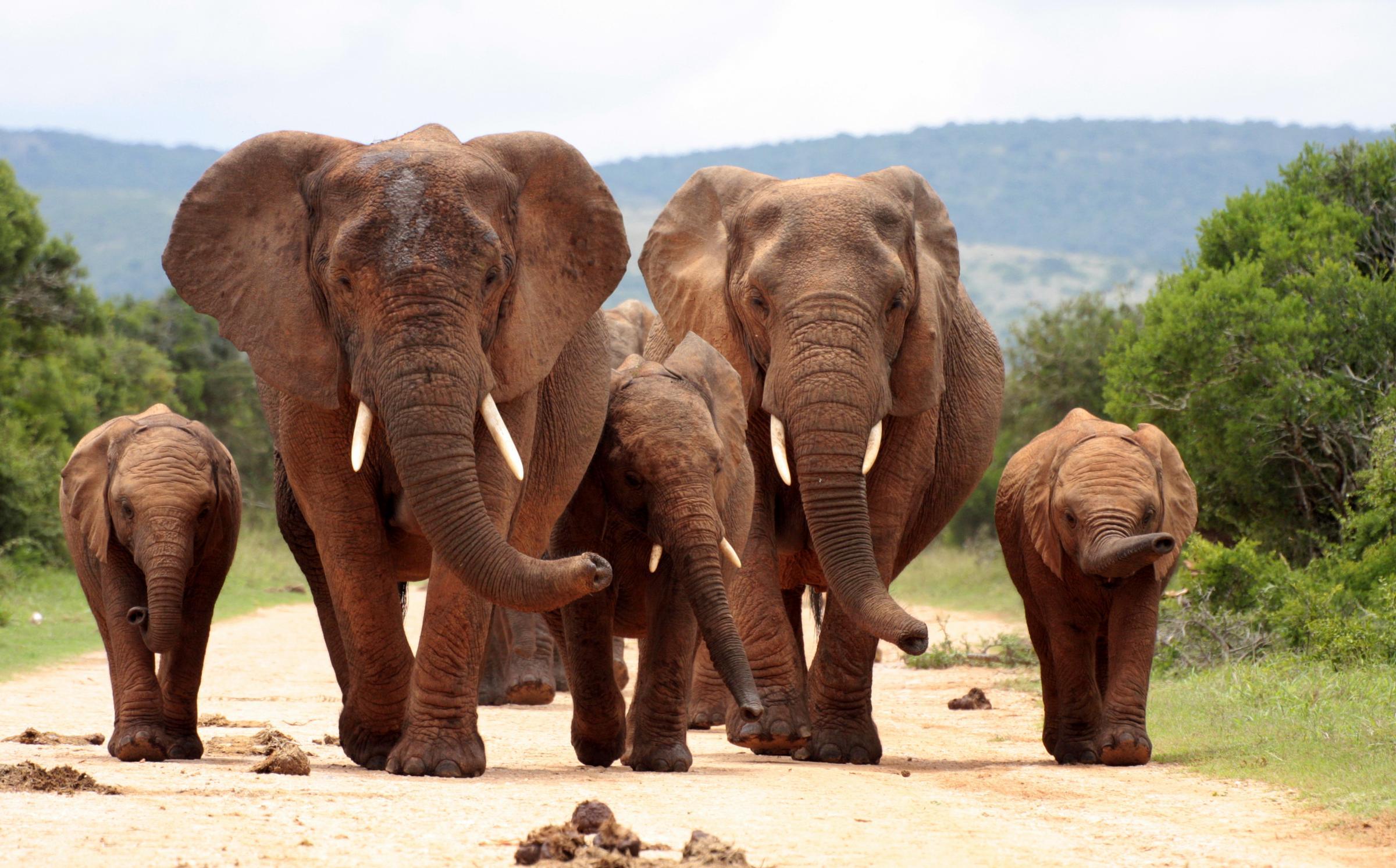 Introduction of ivory bill boosts fight against elephant poaching