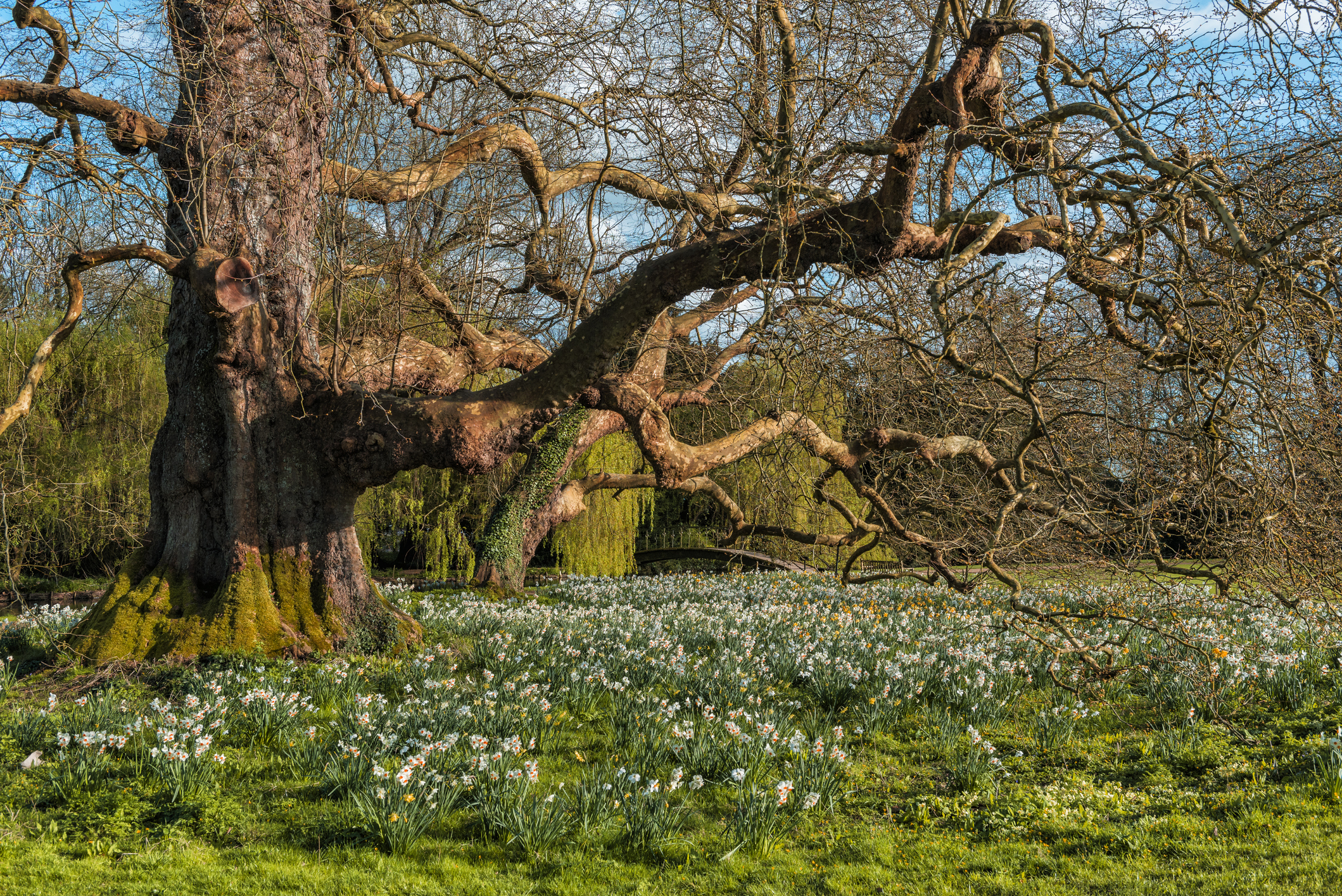 Tree Health Resilience Strategy to protect England's trees from pests and diseases
