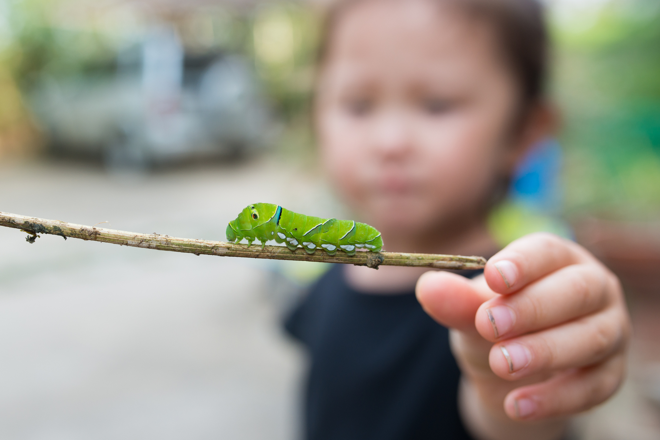 Little girl with a caterpillar