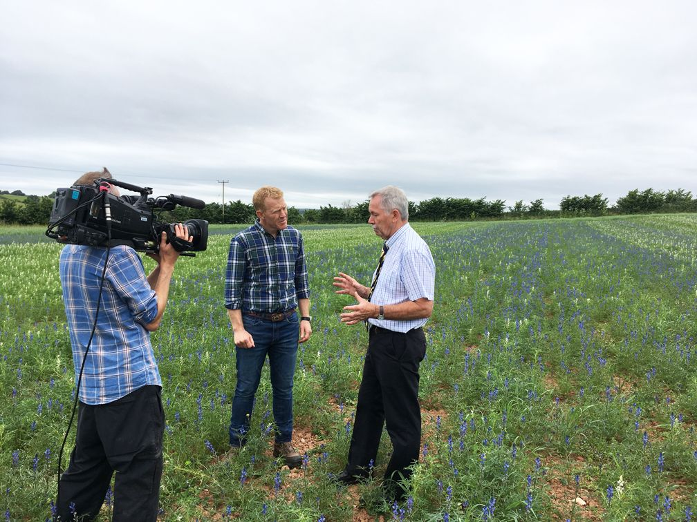 Organic Lupins trial to feature on BBC's Countryfile