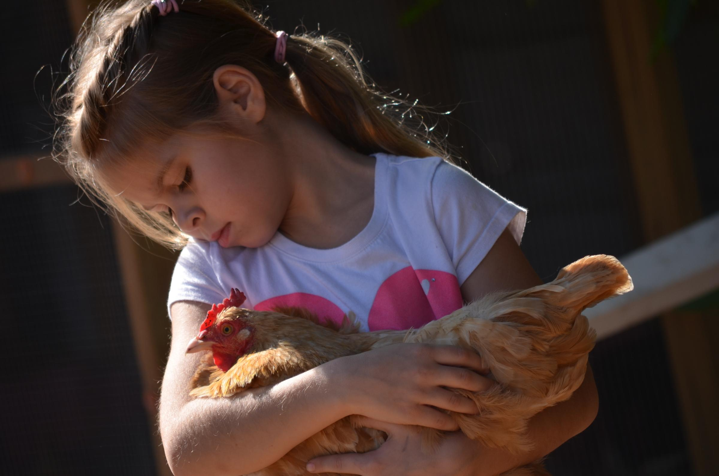 British Hen Welfare Day is September 28