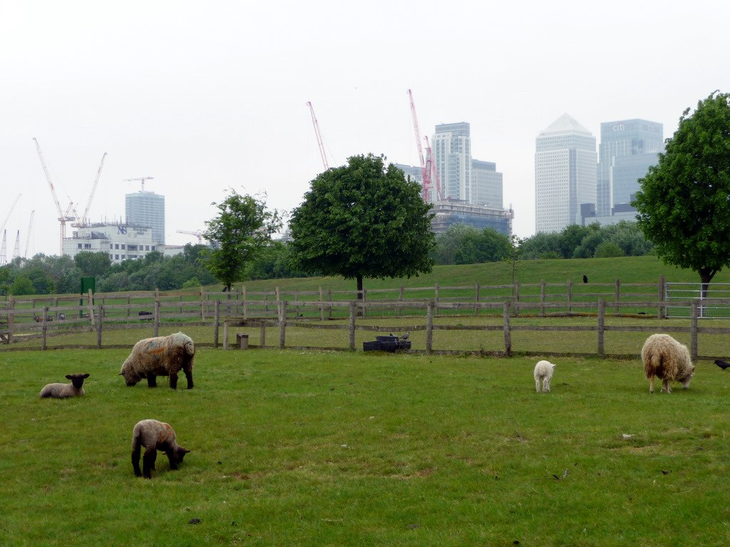 Mudchute Farm, London. image: Christine Matthews / Mudchute Farm, Isle of Dogs