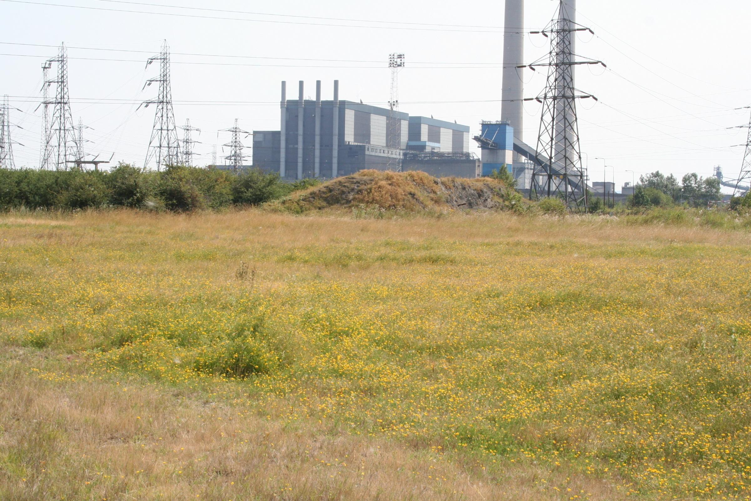 "West Tilbury Marshes has been described as ""irreplaceable"" by insect charity Buglife"