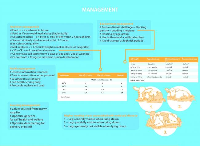 The Calf Health and Welfare Blueprint covers management, monitoring, prevention and teamwork