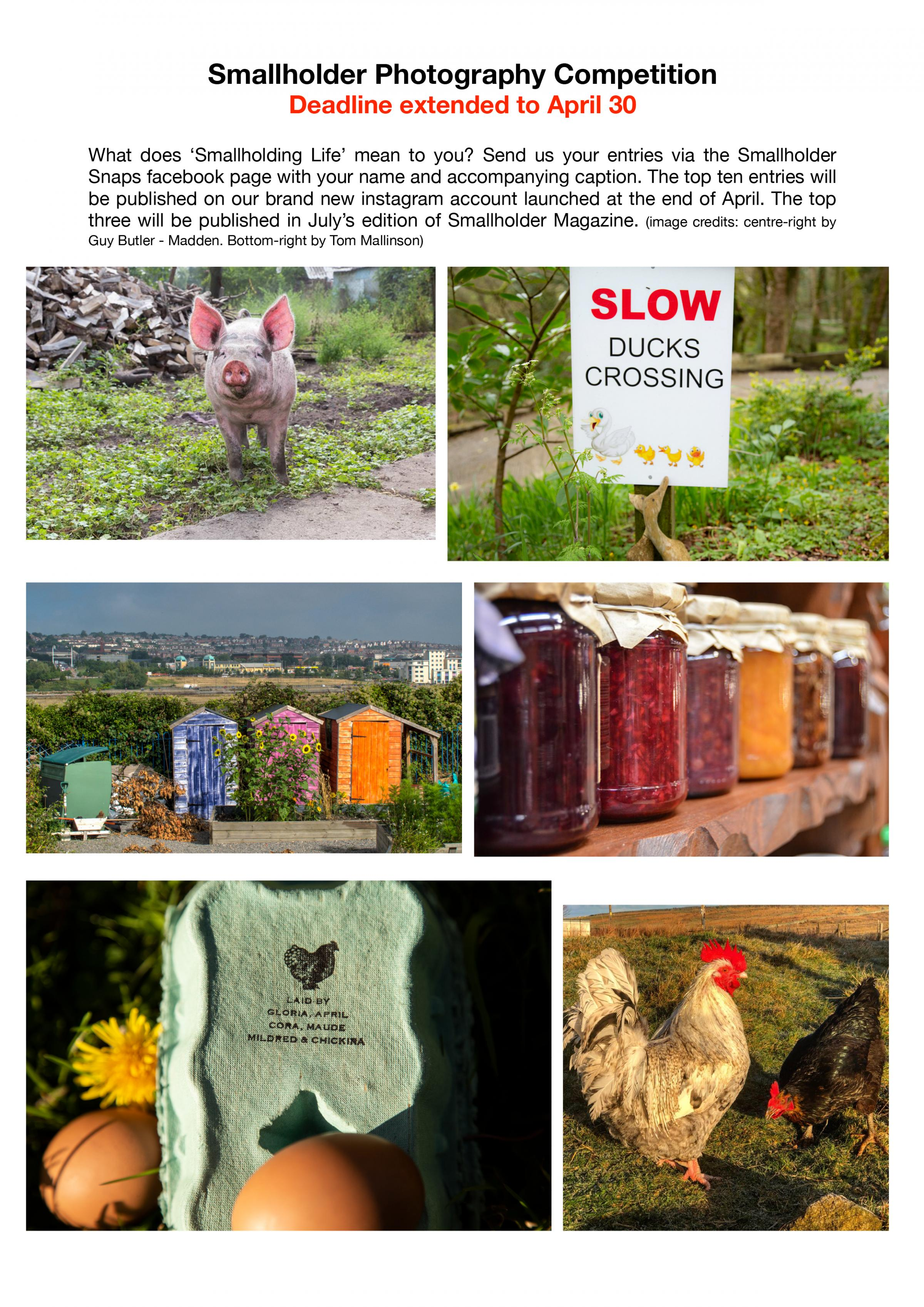 Smallholding Life photography competition