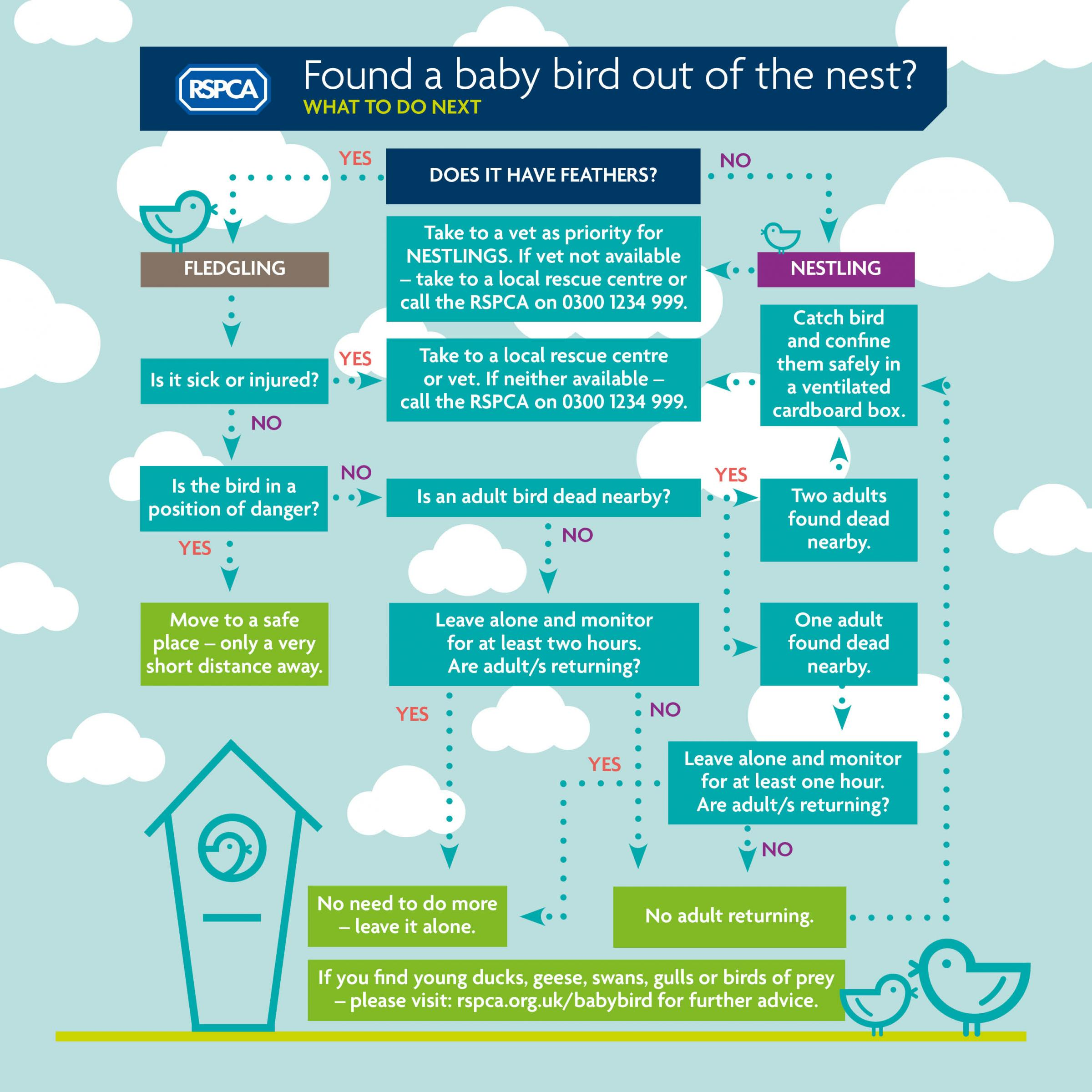 The RSPCA has produced a step-by-step guide to helping baby birds